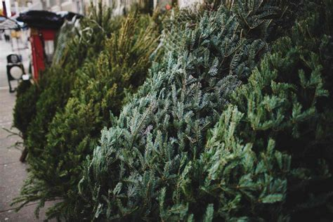 best place to buy a christmas tree near me the 8 best places to buy a tree of 2019