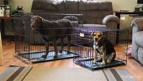 how to stop your dog from pooping in the house how to stop a dog from pooping in a crate step by step video guide