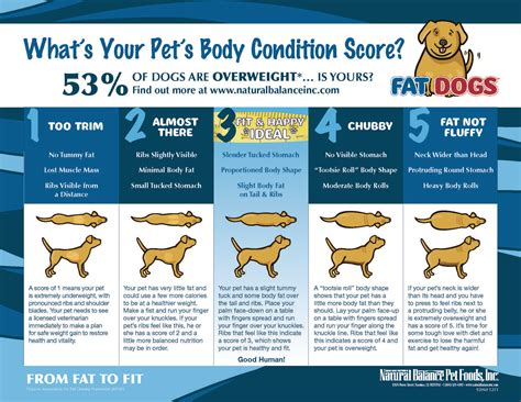 how is my puppy calculator important how to tell if your is overweight iheartdogs