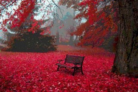 红枫树下的椅子唯美意境背景图片 美图吧