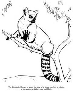 cat sized ring tailed lemur coloring page color luna