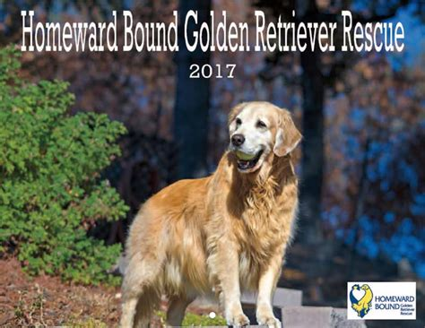golden retriever rescue organizations golden retriever rescue calendar yearbox calendars