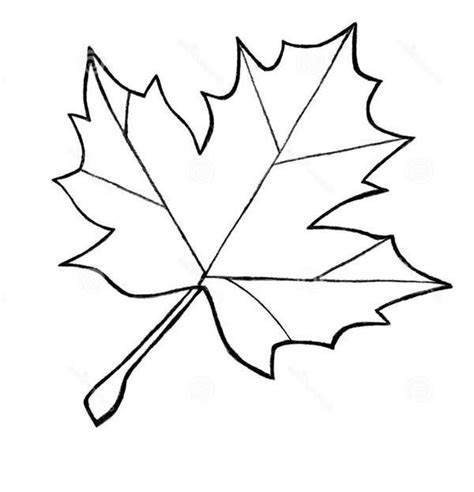 leaf pattern line drawing image result for maple leaf pattern to trace crafty