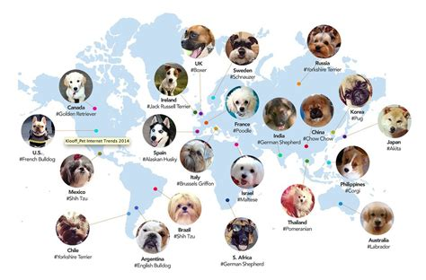 other breeds of dogs the top trending breeds across the world in pictures by kloof town country