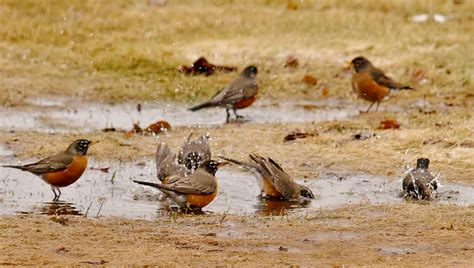 the great backyard add your sightings to the great backyard bird count during