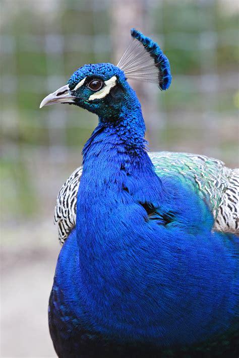 imagenes animales con plumas plumas