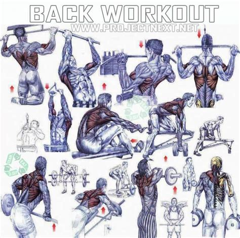 back bench routine back workout healthy fitness exercises bicep tricep