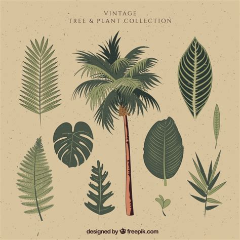 palm tree svg palm leaf vectors photos and psd files free download