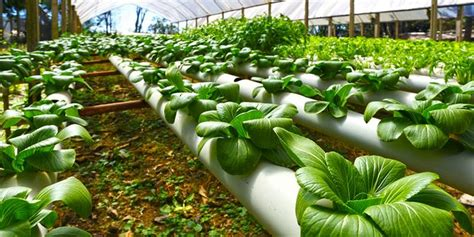 best indoor garden system indoor garden hydroponic system good and bad wac magazine