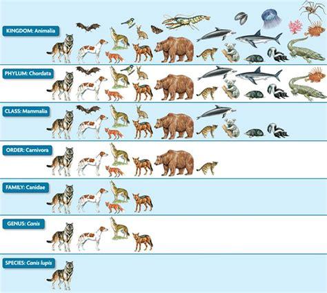 by carolus linnaeus classification kingdom taxonomy png 785 215 703 053 carl linnaeus