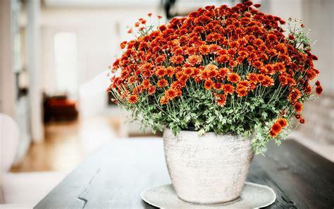 top  houseplants  mothers day david domoney
