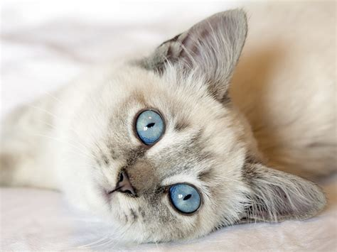 imagenes impresionantes de gatos 191 cu 225 nto sabes sobre los gatos