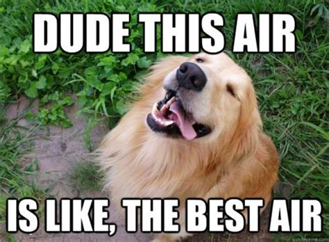 Happy Dog Meme - 20 best dog memes ever