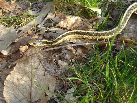 Garden Snake In Basement Pests Part Iv Rodents Sliders And Vermin Dwell360