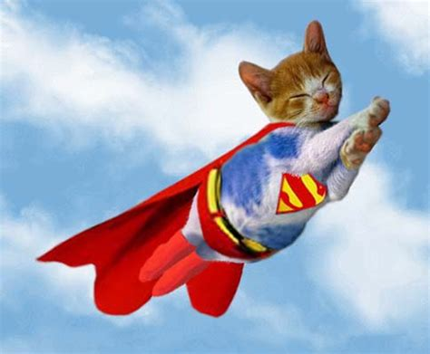 watch: superhero cat saves kid from vicious dog • lazer horse