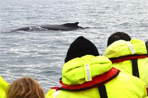rib boat extreme extreme whale watching rib boat tour in akureyri