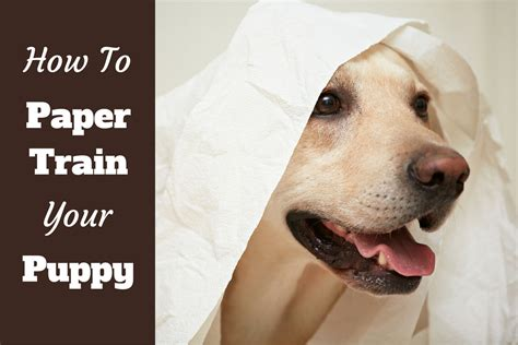 best way to house train an older dog how to paper train a puppy or dog in 6 easy steps