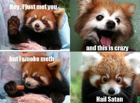 Red Panda Meme - red panda meme