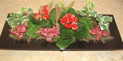 fiori a domicilio genova spedizione piante domicilio search results for fiori a