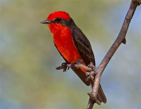 tubac takes flight a celebration of se arizona birds