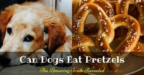 can dogs eat pretzels wellness care archives pup how