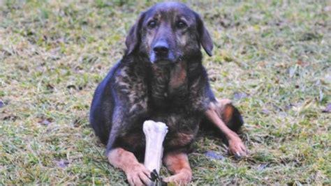 hunde aus deutschland suchen ein zuhause tierheimhunde aus ganz deutschland wir suchen ein neues