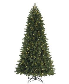 keyser pine christmas tree pine trees and trees on