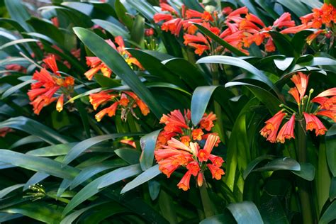 Indoor Flowering Plants by Best Pot Plants For Sun And Shade Burke S Backyard