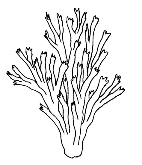 how to draw coral coral reef coloring pages for