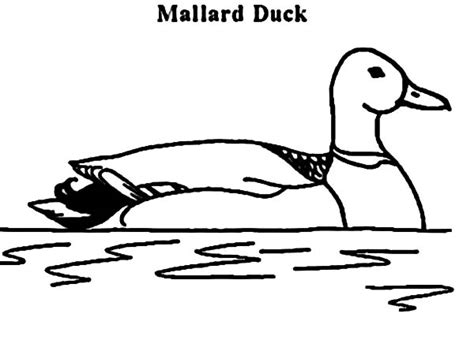 93 Coloring Page Of A Mallard Duck Hunting For Mallard Duck Coloring Page