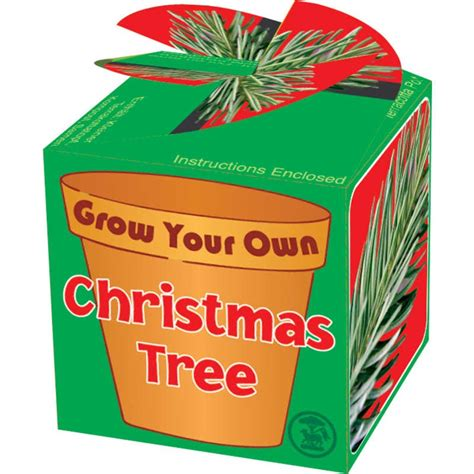 grow your own christmas tree kit grow your own tree tobar wholesalers
