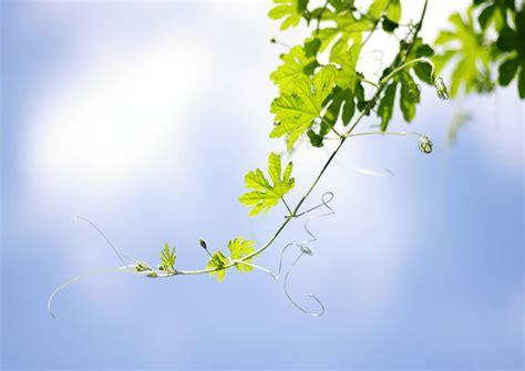 fiori per farsi perdonare het grotere plaatje bewustzijn