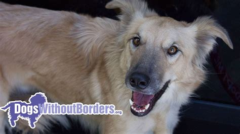 dogs without borders dogs without borders adopt from feral to family
