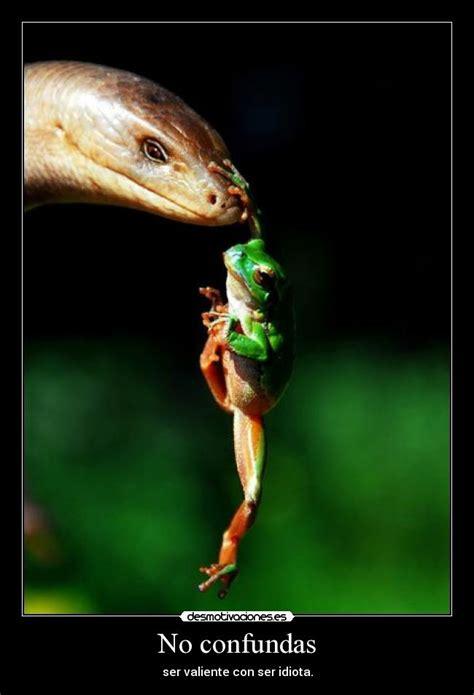 imagenes impactantes graciosas imagenes graciosas e impactantes parte 1 humor taringa