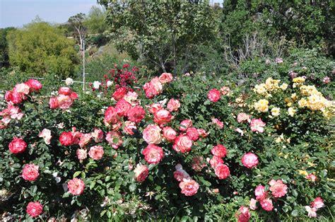 Botanic Gardens Ucr Ucr Today Free Pruning Demonstration Planned
