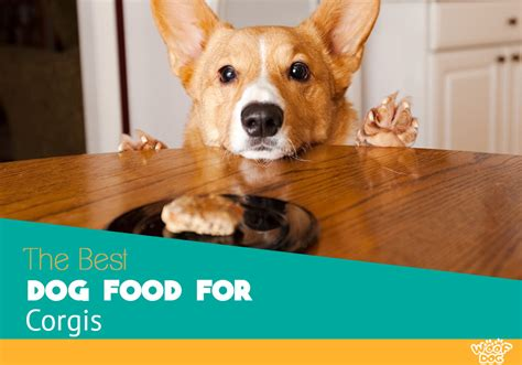 best food for corgi puppy best food for corgis reviews and top picks for 2018