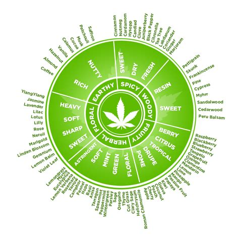 the medicinal value of terpene testing cannabis kurple magazine what to find out more about marijuana terpenes greendorphin