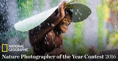 national geographic photo of the year 2016 2016 national geographic nature photographer of the year