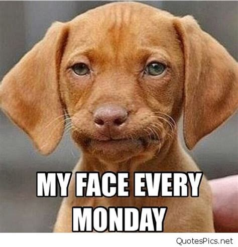 Sad Dog Meme - funny monday dog saying quotes memes photos