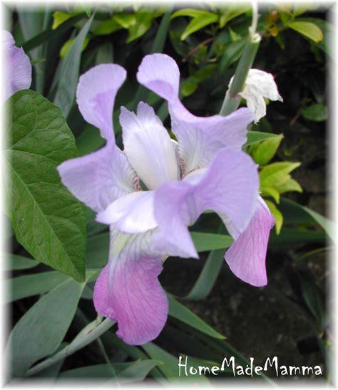 libro i fiori il libro dei fiori di piccolo furfante l iris