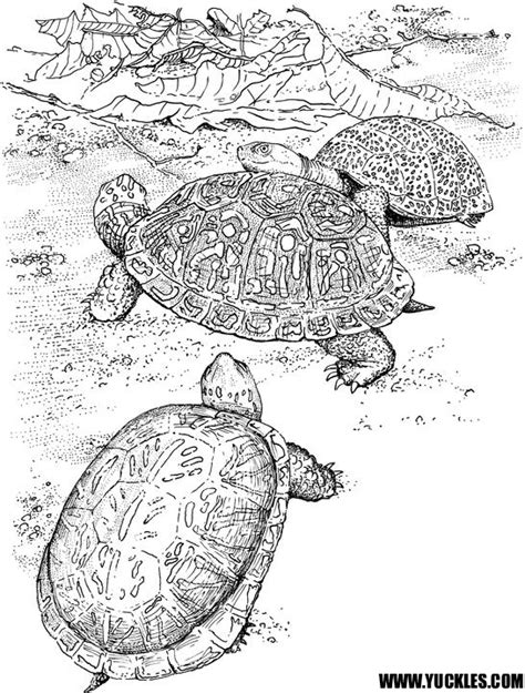land turtle coloring page land tortoise coloring pages coloring pages