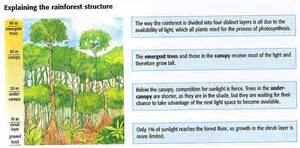 What Does Canopy Mean In Geography by Onlinegeography E Rainforests