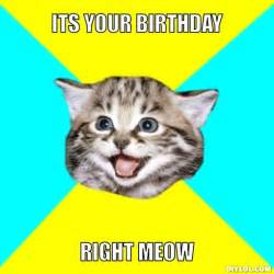 Cat Meme Birthday - memes for gt funny birthday cat memes thoughtful ideas