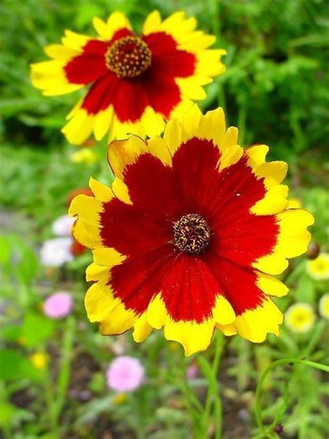 Common Garden Flowers List Flashcards Table On Common Garden Flowers