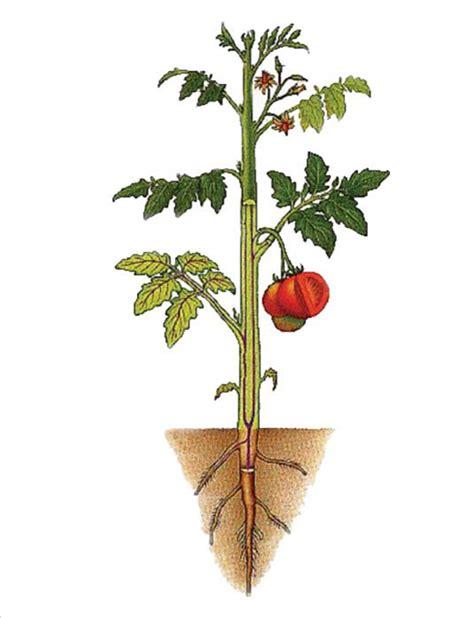 struktur bagian tumbuhan rangkuman pengetahuan alam lengkap