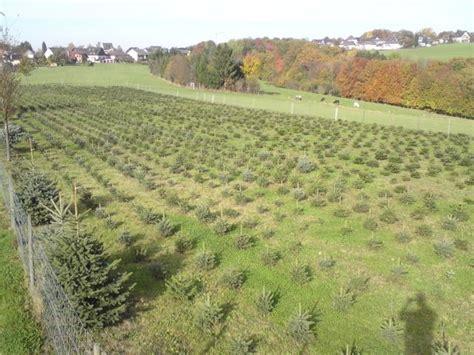 weihnachtsbaum selber schlagen bonn nadelbaumkulturen garten und landschaftsgestaltung