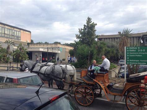 carrozza con cavalli carrozza con cavalli alla cittadella su fb quot si 232 laureata