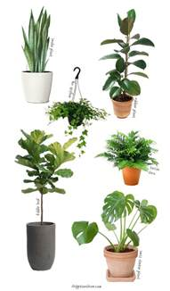 easy to care for indoor plants 6 easy to care for houseplants chippasunshine