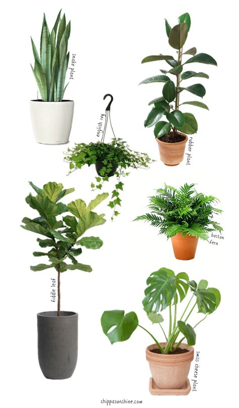 easy care indoor plants 6 easy to care for houseplants chippasunshine