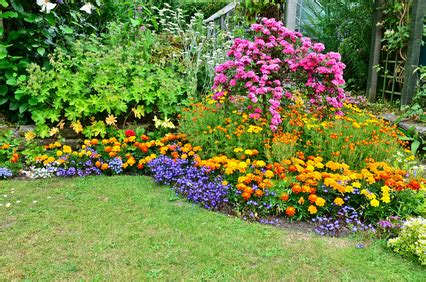a list of perennial flowers from a to z with pictures.